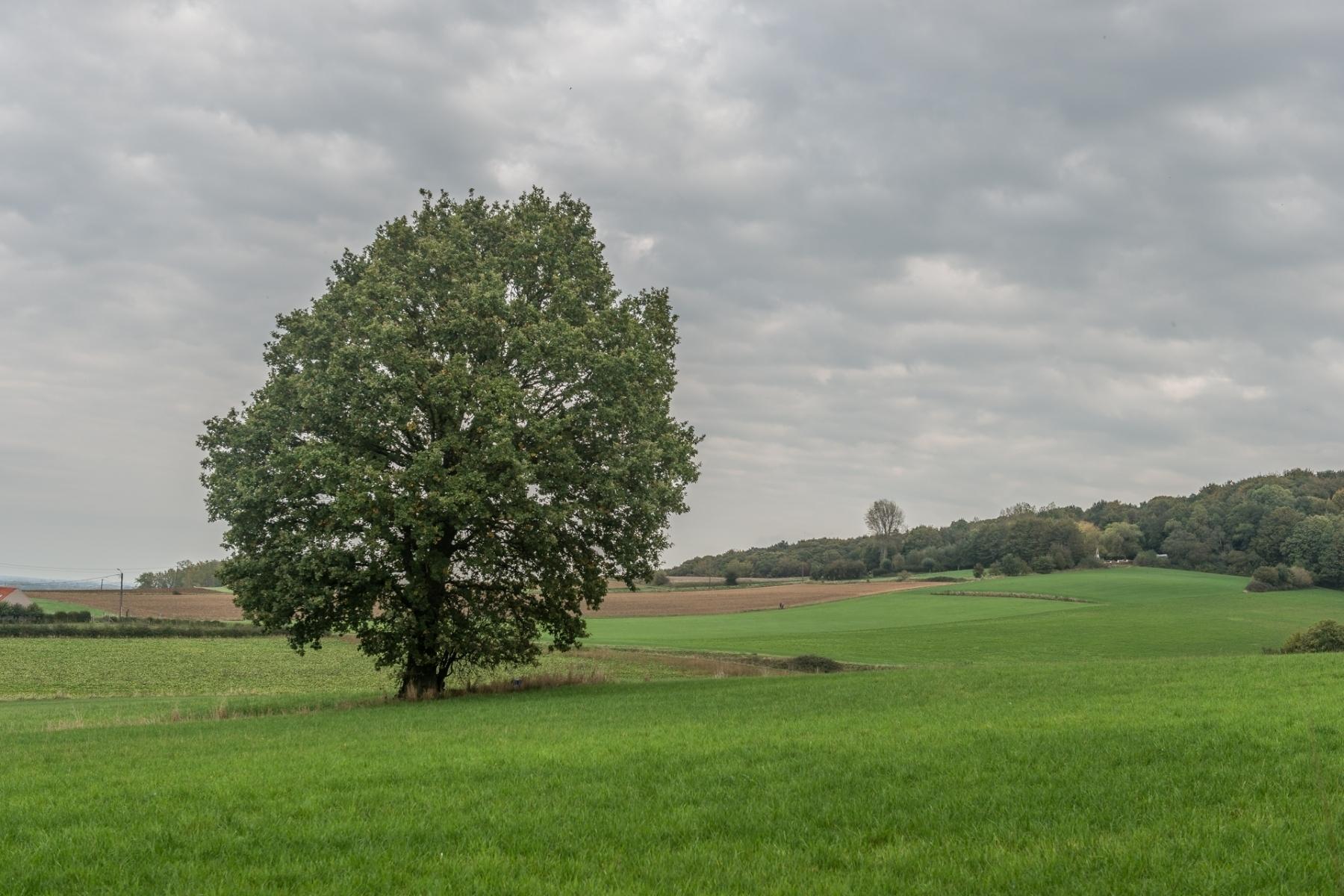 Région-arbre solitaire