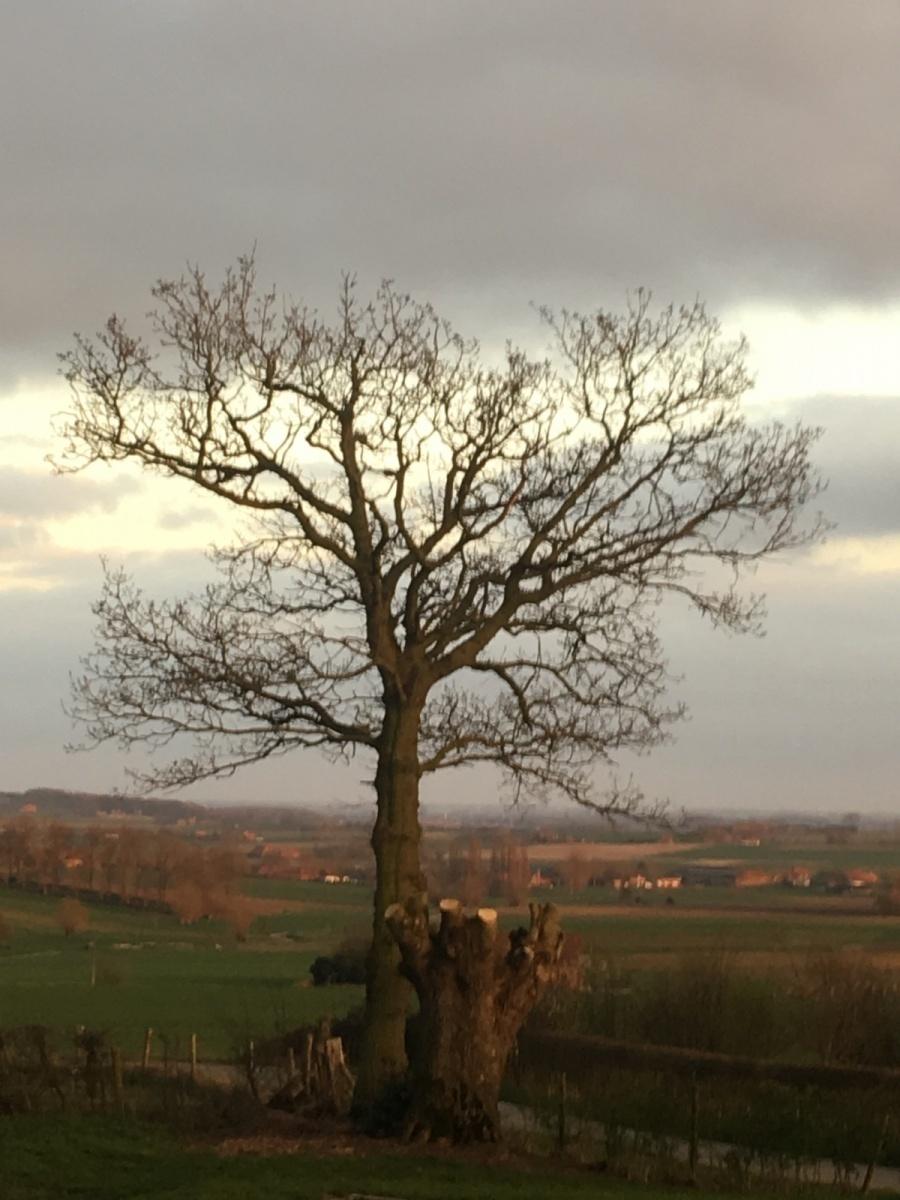 site-tree-corner-pond