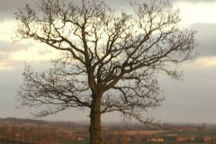site-arbre-coin-étang